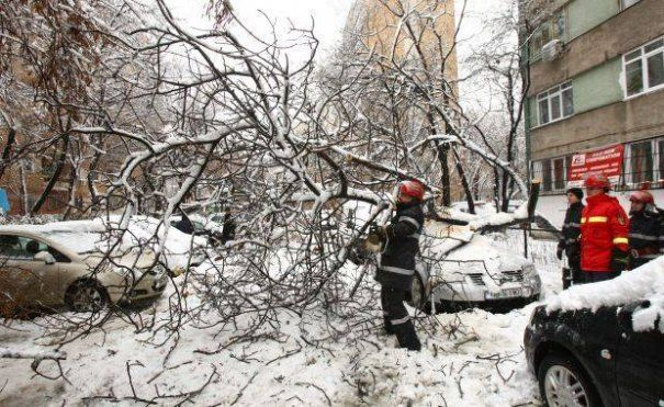 cazut copac masina despagubiri